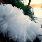 Feather Frost, Tay, Scotland